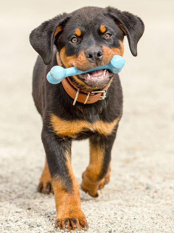 Virtual Puppy Comes Home