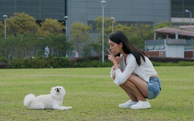 Understanding Threshold Dog Training