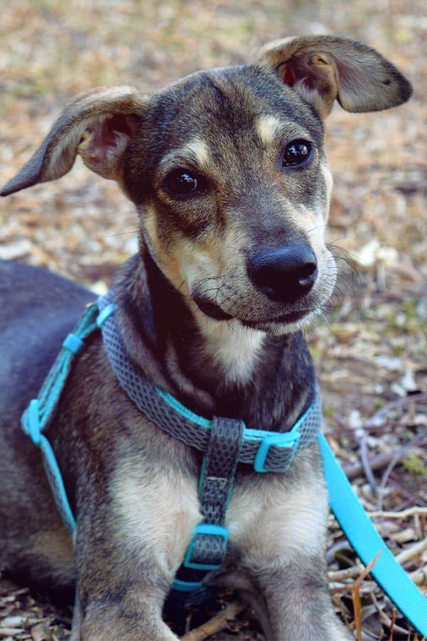 Rescue Rover - DITR - Dog Training Edmonton