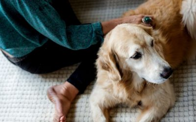 How Dog Owners Help With Desensitization