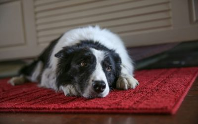 How To Help Rescue Dogs With PTSD
