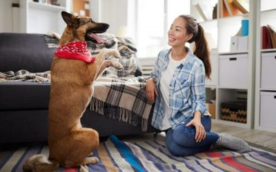 Dog Owner & Trainer Communication: An Important Factor For Successful Dog Training